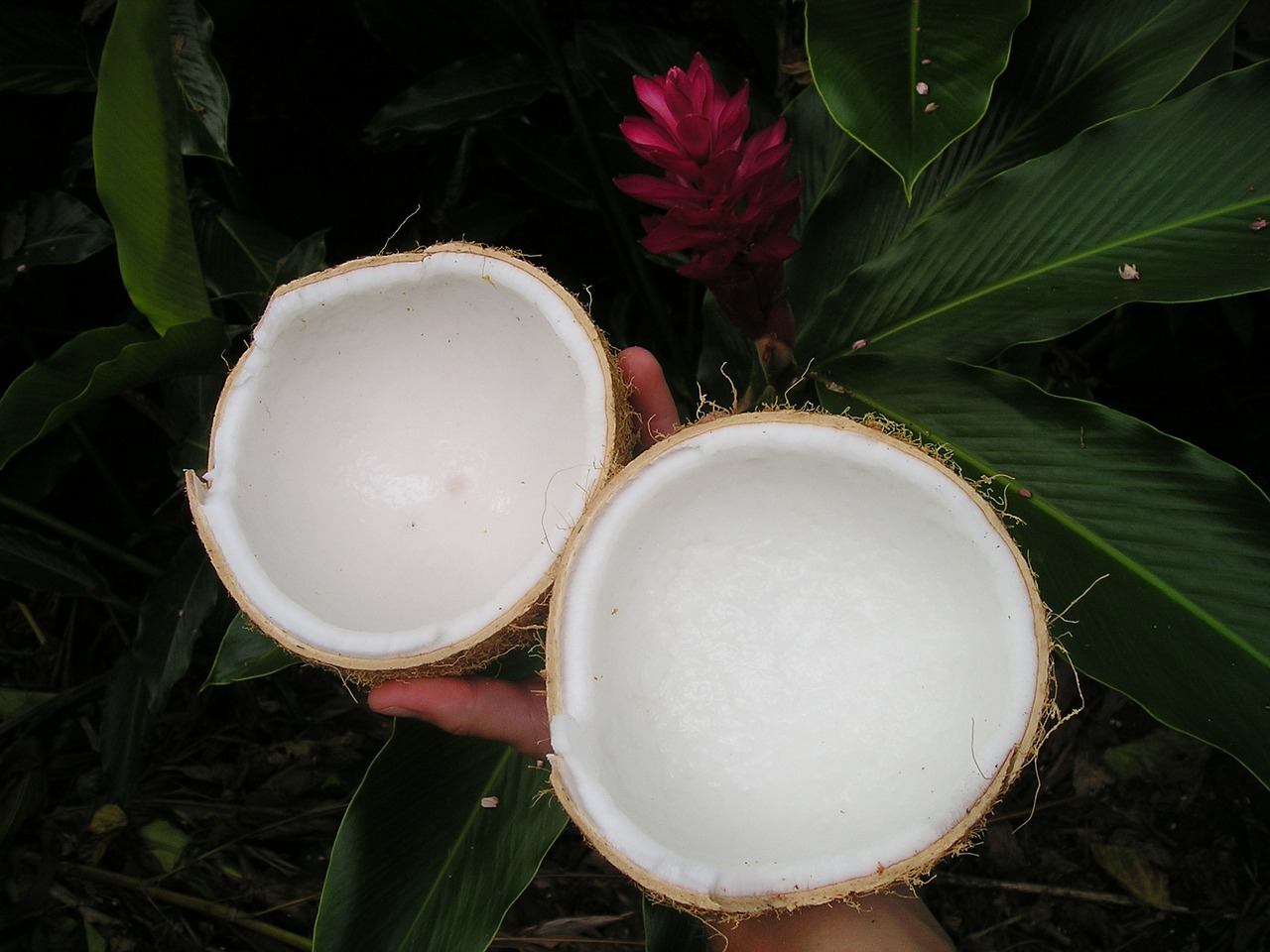 coconut-43_1280