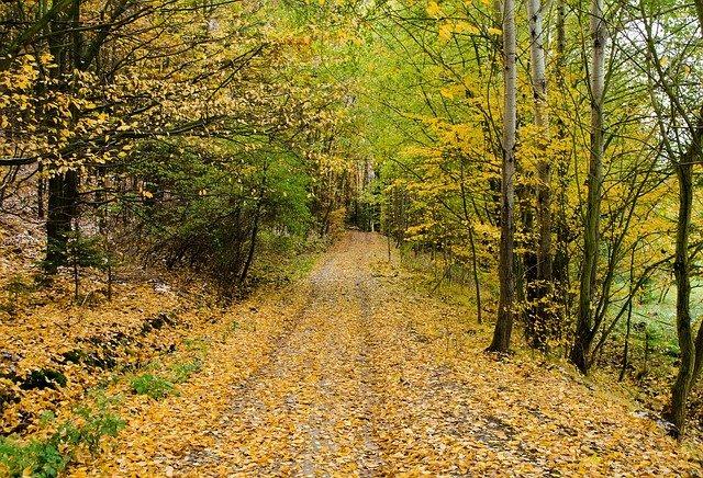 cesta na podzim.jpg