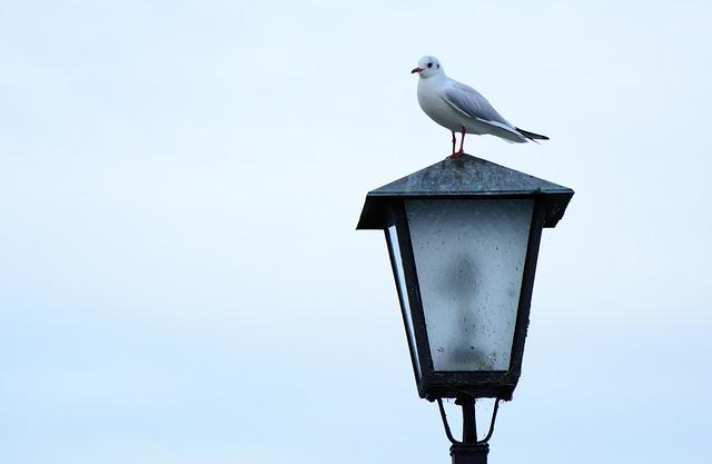 pták na lampě